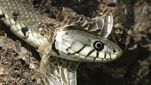 snakes-shed_7192d612b0bb69f2